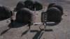 SG-1 nechává na planetě humanoidů zařízení, aby mohli přežít
