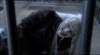 Na hoffanskou látku umírá Wraith